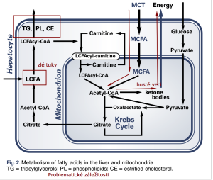 Metabolizmus MCT 2