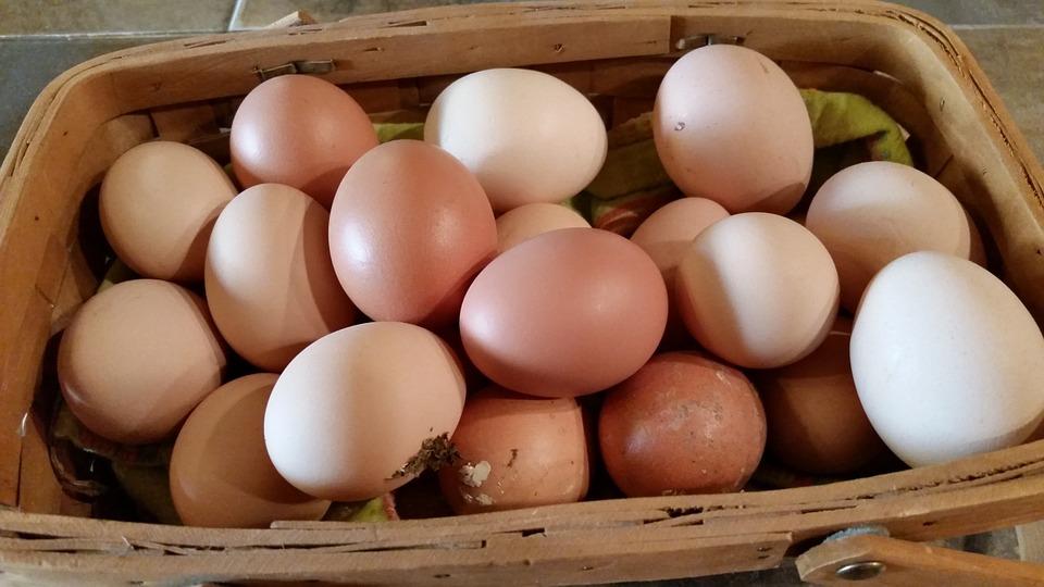farm-fresh-623251_960_720