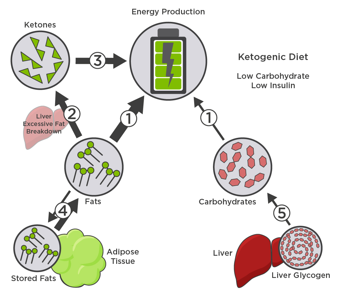 Metabolism ketogenic diet
