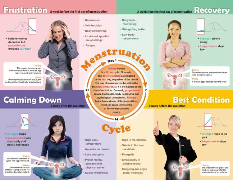 4 fázy ženského cyklu